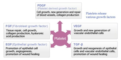 Fungsi growth factor dalam regenerasi sel