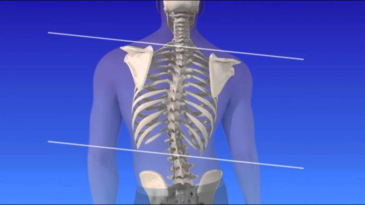 pengukuran kelengkungan tulang belakang