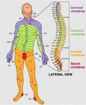 pola nyeri alih pada kelainan vertebra