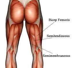 otot hamstring otot paha belakang